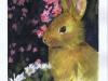 bunny-03-2003-sophia-ehrlich