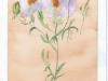 flowers-09-2005-sophia-ehrlich