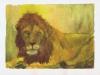 lion-11-2002-sophia-ehrlich