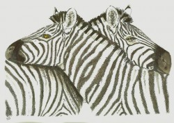 Zebras. By Lahle. Ink and pen.