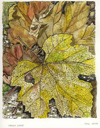 Virginia Fall Leaves, a watercolor/ink painting by Lahle. 2004.