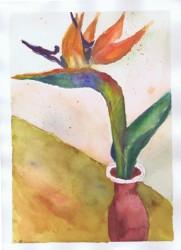 Bird of Paradise 11 2002 Sophia Ehrlich