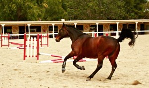 Andy Cantering