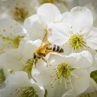 My Honey Bee by Lahle Wolfe