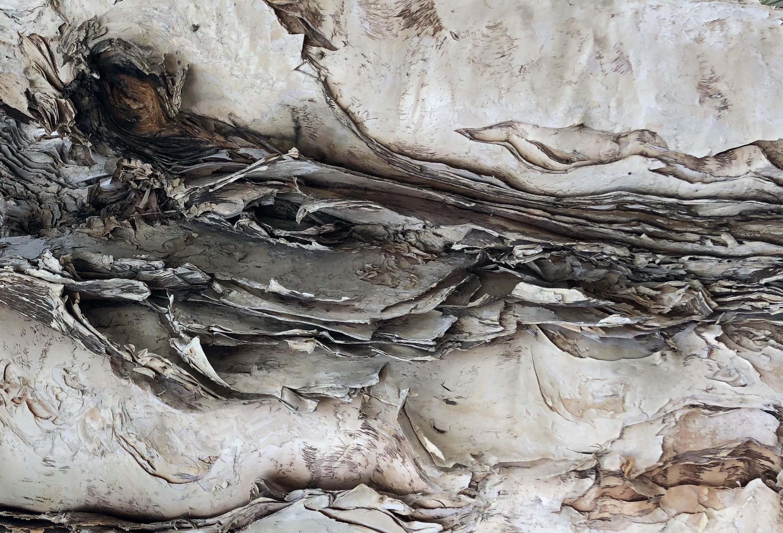 Eucalyptus Bark #3 photograph by Lahle Wolfe Woodland Hills CA 2017