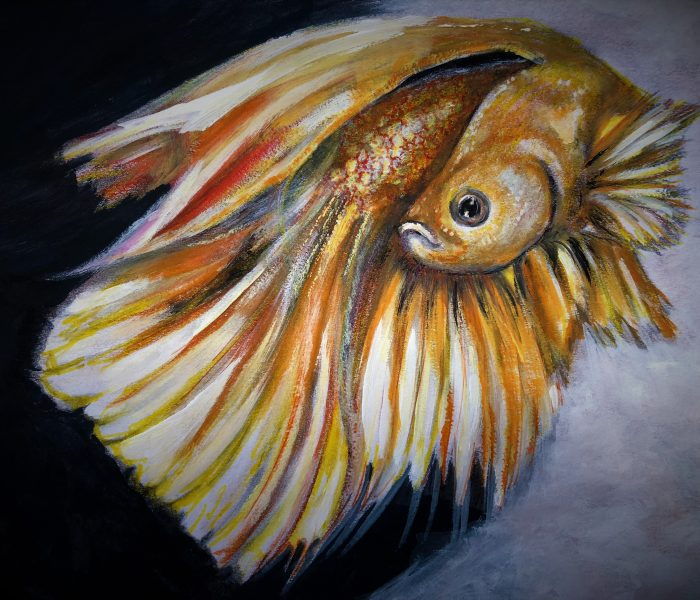 Gold Beta Fish 7 2018