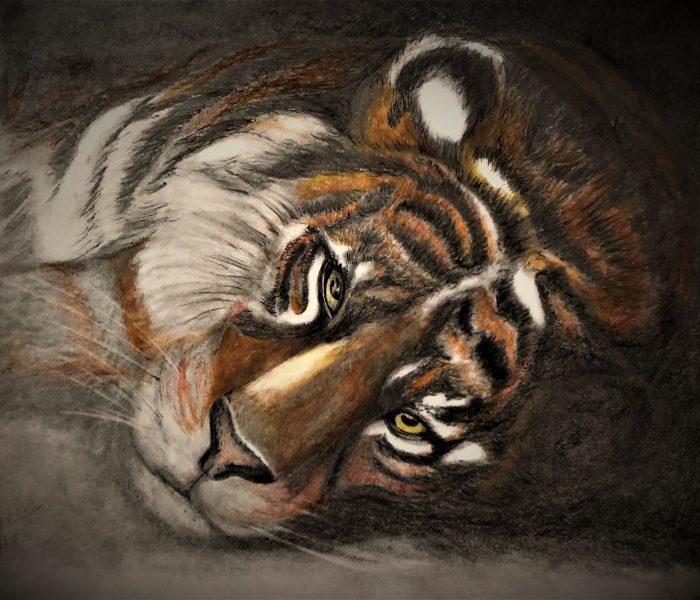 My Tiger 7 2018