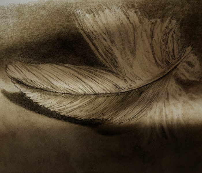Feather in the Shadows