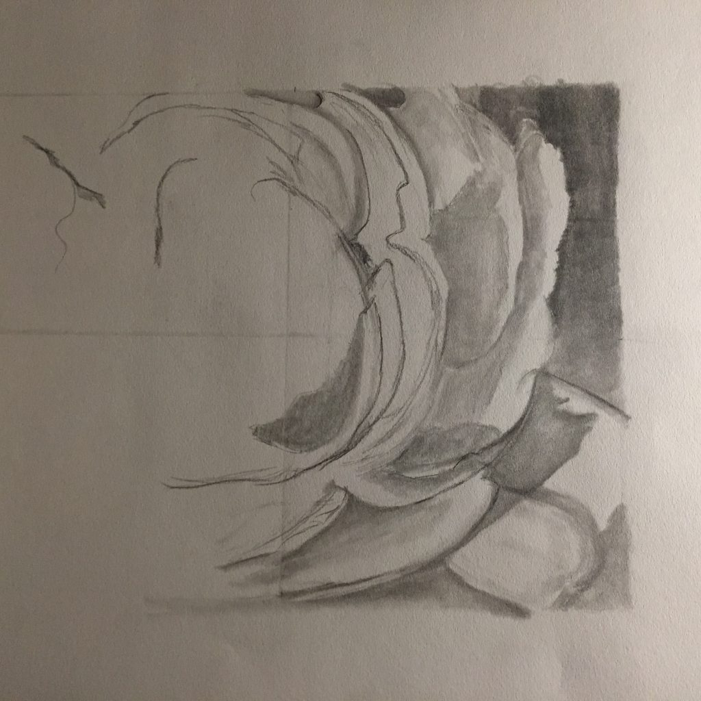 Beginning of a rose sketch in pencil