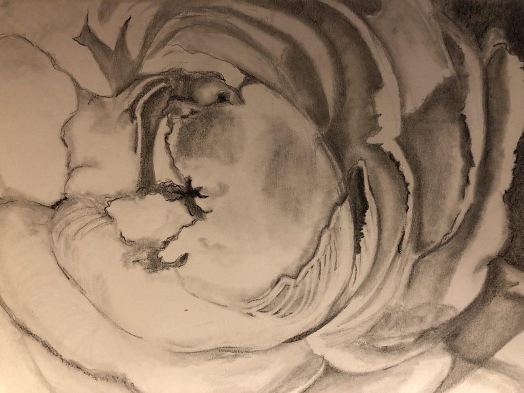 Rose sketch draft