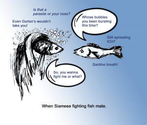 Mating Beta Fish